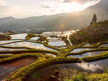 Reise China: Yunnan Provinz - Reisterrasse Yuanyang