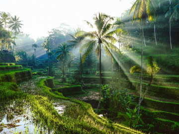 Reise Indonesien: Reisfelder auf Bali