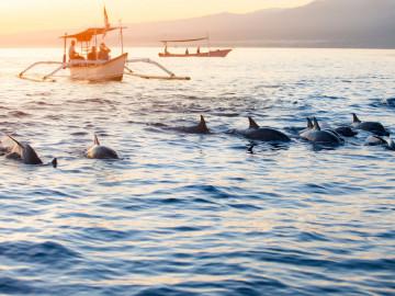 Indonesien Reise: Lovina Strand - Delfinbeobachtung auf Bali