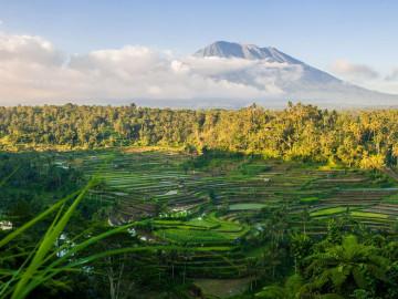 Reise Indonesien: Reisfelder