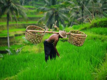 Reise Indonesien: Reisbauer auf Bali