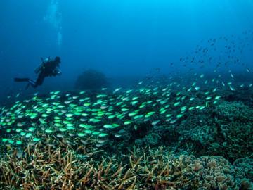 Indonesien Reise: Tauchen - Gili Inselkette
