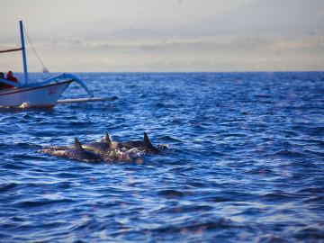 Indonesien Reise: Lovina Beach - Delfinbeobachtugn auf Bali