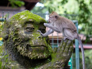 Indonesien Reise: Affenwald Ubud - Bali