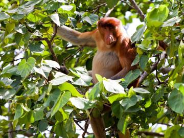 Malaysia Reise - Bako Nationalpark - Tiere