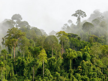 Malaysia Reise - Taman Negara Nationalpark