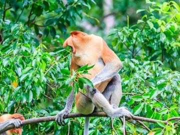 Reise Malaysia - Borneo