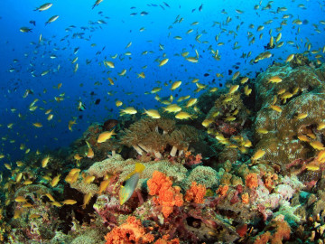 Philippinen Reise: Tauchen und Schnorcheln