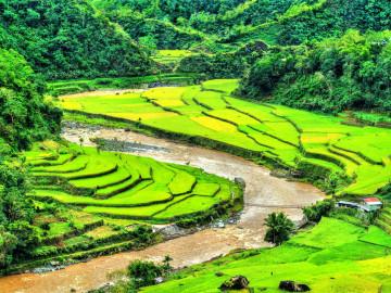Philippinen Urlaub: Reisterrassen der Ifugao
