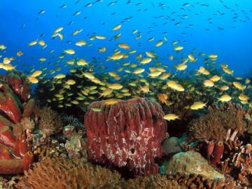 Philippinen Urlaub: Tauchen und Schnorcheln im Taucherparadies