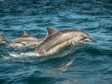 Sri Lanka Reise: Delfine