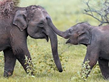 Sri Lanka Reise: Elefanten im Yala Nationalpark