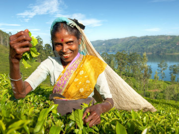 Reise Sri Lanka: Teeplantage