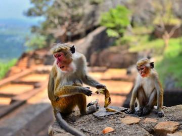 Sri Lanka Reise: Sigiriya
