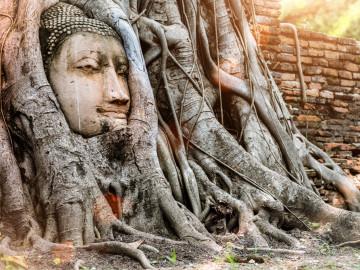 Reise Thailand: Buddha Baum - Ayutthaya
