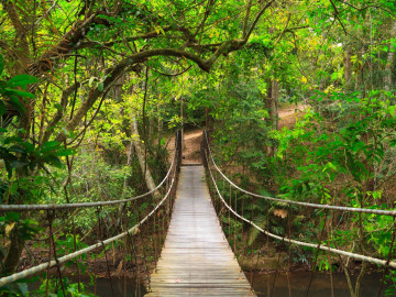 Thailand Reise: Hängebrücke im Khao Yai Nationalpark