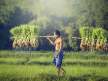 Reise Vietnam: Reisbauer