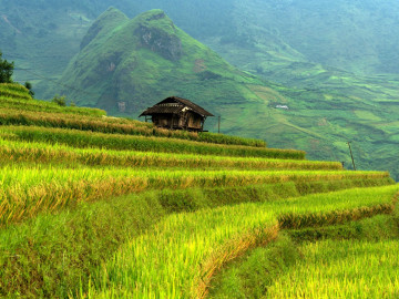 Reise Vietnam: Berge und Reisfeld