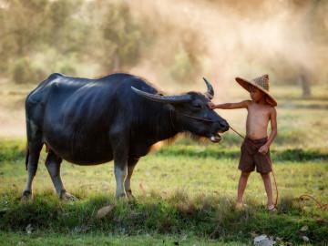 Reise Vietnam: Kind und Büffel