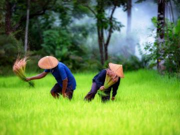 Vietnam Reise - Reisbauern