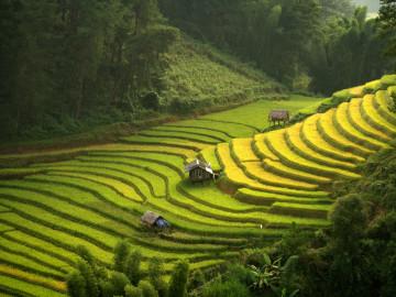Vietnam Reise: Sapa Reisterrasse