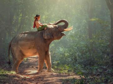 Reise Vietnam Elefant