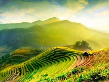 Reise Vietnam Reisfelder