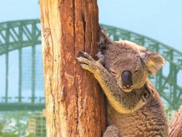 Australien Reise Rundreise Südaustralien