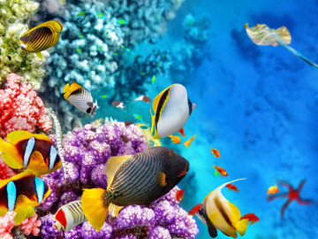 Reise Australien Busreise Great Barrier Reef