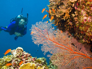 Australien Reise Rundreise Great Barrier Reef