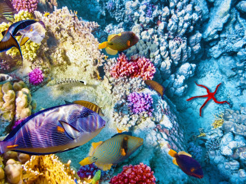 Reise Australien Urlaub Great Barrier Reef