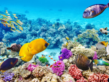 Australien Rundreise Great Barrier Reef