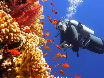 Australien Rundreise Great Barrier Reef Tauchen