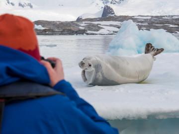 Kanada Arktis: Robbe