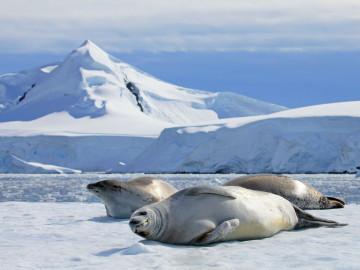 Kanada Reise - kanadische Arktis Robben
