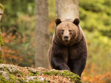 Kanada Reise: Bär im Banff Nationalpark
