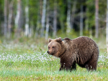 Kanada Reise Vancouver Island Bären Beobachtung