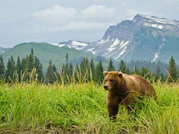 Kanada Reise Bär
