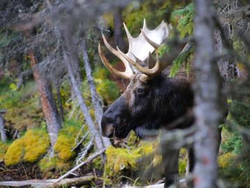 Reise Kanada: Tiere beobachten