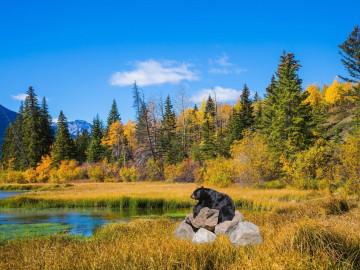 Kanada Reise Manitoba: Schwarzbär
