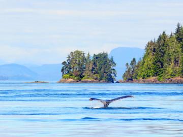 Reise Nordamerika: Vancouver Island