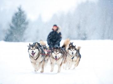 Kanada Reise in Yukon: Hundeschlitten