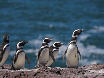 Reise Argentinien Patagonien