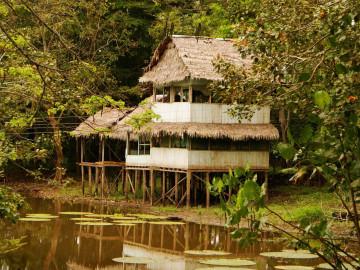 Brasilien Amazonas Regenwald