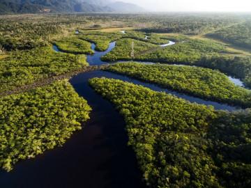 Brasilien Rundreise Amazonas Regenwald