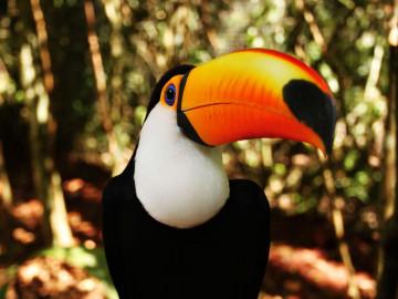 Brasilien Amazonas Regenwald Tucan Vogel