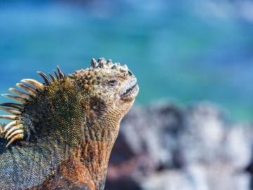 Galapagos-Inseln -  Reise Ecuador