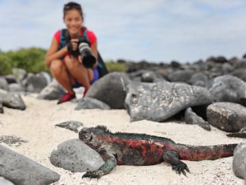 Reise - Galapagos Inseln - Leguan