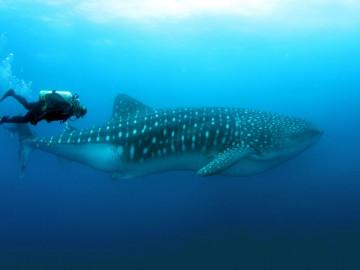 Galapagos-Inseln - Taucherparadies