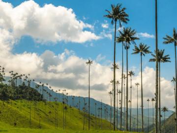 Kolumbien Reise Valle de Cocora